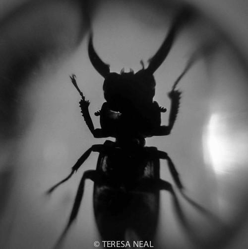 Gallery|Cover of In the Eye of Noir © Teresa Neal